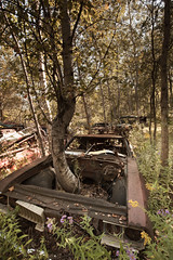 How Long? (Kashif Izhar) Tags: auto old pink flowers trees flower tree green abandoned car vintage woods rust branch branches rusty vehicle growing wreck grown