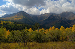 green and gold along the alpine scenic loop in utah (ctfy) Tags: blue autumn sky mountain green fall clouds gold utah nikon loop scenic september route alpine aspen 2012 quaking d7000