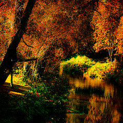 Autumn on the Dodder (Steve-h) Tags: autumn trees ireland light red dublin orange sun sunlight green art tourism nature water leaves sunshine yellow bronze canon reflections river eos gold design europe colours shadows zoom tourists telephoto shade handheld recreation aerlingus spotmetering dodder aperturepriority rathgar steveh canonef100400mmf4556lisusm riverdodder 100mm400mm canoneos5dmkii canoneos5dmk2 september2012 rememberthatmomentlevel4 rememberthatmomentlevel1 rememberthatmomentlevel2 rememberthatmomentlevel3 rememberthatmomentlevel7 adobephotoshoplightroom41windows rememberthatmomentlevel9 rememberthatmomentlevel5 rememberthatmomentlevel6 rememberthatmomentlevel8 rememberthatmomentlevel10