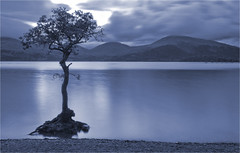 Millarochy Bay tree (davidmccrone) Tags: longexposure mountains tree water canon landscape scotland twilight dusk country loch trossachs lochlomond balmaha millarochy