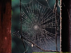 Web (samitsinha) Tags: samit