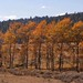 YNP-GTNP-fall-colors08