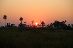 Sunset (www.mattprior.co.uk) Tags: adventure adventurer journey explore experience expedition safari africa southafrica botswana zimbabwe zambia overland nature animals lion crocodile zebra buffalo camp sleep elephant giraffe leopard sunrise sunset