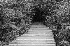 Path to the unknown (GayanDeSilva) Tags: path swamp unknown walkingpath baddegana srilanka