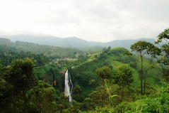 Asian Highland (krissieskaugvoll) Tags: travel srilanka asia nature waterfall trees outdoor landscape hill foothill mountainside mountain