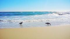 Picnic on the beach (F.emme) Tags: beach huntingtonbeach pacificocean ocean seashore shore seagulls gull gulls seagull shorebird mobile galaxynote3 samsung cellphone mobilephone phone