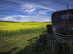Resting in the Shade II (keith_shuley) Tags: vehicle truck farmvehicle canola yellow blue olympus olympusomdem1