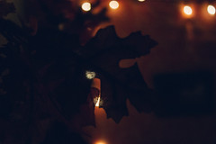 IMG_6060-2 (difficult listening) Tags: dark night grain lofi christmas lights autumn halloween september november october leaves garland holiday