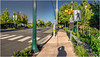 Early Evening On Twelfth Avenue (Patricia Colleen) Tags: panorama tsawwassen thestreetswhereilive 12thavenue crosswalk