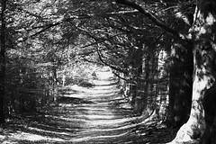 Bienvenue dans les bois! (RW-V) Tags: canoneos70d canonef70300mmf456lisusm develuwe hoenderloo otterloseweg fort forest woods bos wald woud bomen trees arbres bume nb zw sw bw noiretblanc monochrome 80faves 100faves 120faves 150faves 175faves 200faves 225faves 250faves 275faves