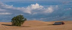 a tree and it's BarnIMGP2473 (candysantacruz) Tags: washington easternwashington palouse farm fields clouds redbarbmfarmfields
