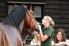 Washing down the Shire Horse (s andrews) Tags: shire horse wimpole farm sonyrx10m3 nationaltrust