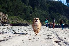 100 mtrs. playa (Jeantoorres) Tags: no octopus bio genera punta parra playa animal perro correr deporte olimipico canon canonistas feliz