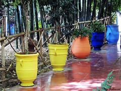 Not only bleu Majorelle (Shahrazad26) Tags: jardinmajorelle bleumajorelle marrakech marokko maroc morocco