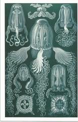 Box Jellyfish (LillieBuggy) Tags: jellyfish box wow pretty blue postcard