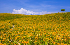 ---  (Chia Hsien) Tags:         asia canon flowers  taiwan greenfields plant crop    greenbelt sunnyday  sunny cozy sunlight promising