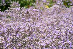 DSC01090.jpg (chagendo) Tags: pflanze makro makrofotografie sonyalpha7ii 90m28g outdoor