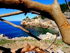 RAMO (xELyx) Tags: ramo albero deya deia caladeya caladeia mare spiaggia sea playa beach water agua paesaggio vista