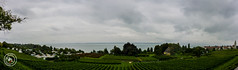 Bodensee (MX-Photographie) Tags: bodensee see sonyalpha ilce6000 6000 wasser nature natur panorama weinberg wolken cloud