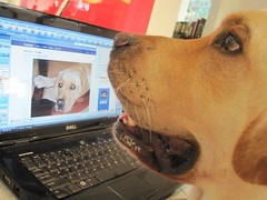 Hercules is fascinated seeing his pictures on Face
