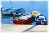 Gabbiano che osserva le barche - Seagull looking boats (Fabio Criniti) Tags: sea summer boats nikon mare estate seagull barche provincia colori gabbiano 2012 trapani bonagia nikond3100 nikkorafs3518gdx fotoamoremio fabiocriniti