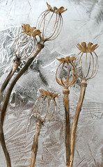 "Poppy Seed Pods in Ice • <a style=""font-size:0.8em;"" href=""http://www.flickr.com/photos/77881881@N06/7944858384/"" target=""_blank"">View on Flickr</a>"