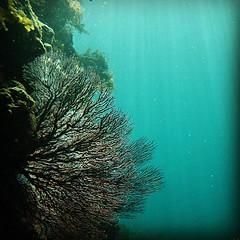 #南伊豆 #シュノーケリング 海の中は別世界でした。 #izu #snorkeling #blue