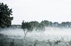 Manca solo il conte Dracula! (Gariglio Laura) Tags: panorama nikon italia ombre luci nebbia ostia animali biancoenero
