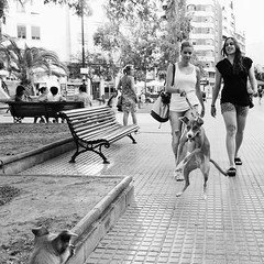 Dog emotions (unoforever) Tags: street people dogs monochrome photography calle women gente streetphotography perro streetphoto perros salto fav mujeres fotografía castellón spmonochrome bestof2012 unoforever