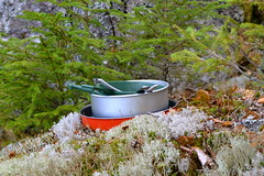 From the forest (Cilia Schubert) Tags: trip travel horse sun flower tree nature water leaves weather animal forest leaf education sweden hiking peaceful swedish canoe blueberry climate vnern vttern vrmland