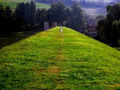 oca_Arignano2012_IMG_0180_1 (stegdino) Tags: verde green bird perspective goose behind vanishing oca uccello gamewinner challengeyouwinner pinnacle20121007