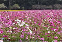 1Day-trip-Jim-Thompson-Farm&Dasada-Gallery_E12663461-018