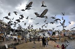 Pigeon flew (Julien Falissard) Tags: india pigeon vol animaux 2012 inde