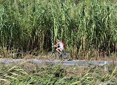 n the countryside (Eleanna Kounoupa) Tags: reeds cyclists countryside   greececorfuionianislands