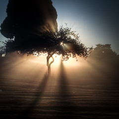 Graveyard Sunrise (Alan Drake) Tags: morning sky sun tree graveyard grass yellow fog sunrise 50mm nikon dew d7000
