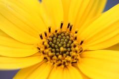 fiore e ettore (M. Bececco) Tags: cane italia giallo fiori fiore bianco animali bastia ettore umbra manuelo bececco