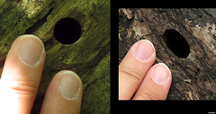 20120606_01 + 20120608_04 Giant bore-holes in wood, maybe by beetle larvae??? | Plitvice Lakes National Park, Croatia (ratexla) Tags: life travel summer vacation holiday cute travelling nature beautiful animal animals insect cool diptych europe hole earth wildlife croatia insects holes backpacking journey traveling biology insekt epic interrail oval circular semester vackra 2012 invertebrate invertebrates zoology hrvatska plitvice interrailing tellus kroatien djur organism nonhumananimals plitvicelakes insekter eurail vacker plitvicelakesnationalpark tgluff plitvikajezera vilda europaeuropean nonhumananimal tgluffning tgluffa ryggradslsadjur borrhl eurailing photophotospicturepicturesimageimagesfotofotonbildbilder canonpowershotsx40hs ratexlasinterrailtrip2012 resaresor tgresatgresor 6jun2012
