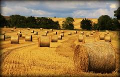 Bales (niknok2007...) Tags: farm farming harvest straw crop round bales harvester harvesting