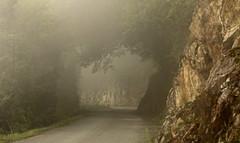 un dimanche d'automne (bulbocode909) Tags: automne suisse brouillard brume valais mfcc