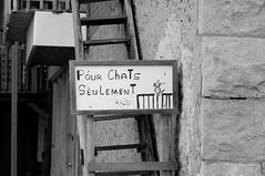 Pour Chats Seulement! (_Wilhelmine) Tags: 2012 reisefreiheit reisenbildet manknntedenkenesgibtdakeinefarben einmalberngrosenteich farbbildweg