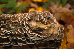 Microcosme (Jean-David & Anne-Laure) Tags: autumn canada mushroom automne quebec champignon stoneham montwright