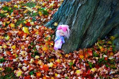 The colors of Fall.....♥