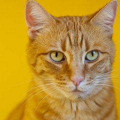 Pico (Creative_Light_Photography) Tags: portrait orange colors cat availablelight catchy