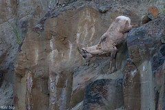 YellowStone-9913-2.jpg (ngkaiwa) Tags: yellowstone yellowstonepark