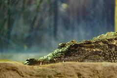 Acuario Agosto 2016 (12) (Fernando Soguero) Tags: acuario zaragoza acuariodezaragoza aragn turismo aquarium nikon d5000 fsoguero fernandosoguero