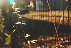 """An endless sky is there"". (palaabrasusadas...) Tags: sky cielo sol sun sunset atardecer atardeceres madrid espaa spain ciudad parque san isidro park endless luz light bokeh desenfoque"