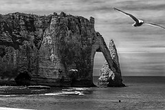 tretat (savolio70) Tags: stefanoavolio tretat savolio seagull gabbiano scogliera cliff normandia normandy