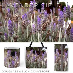 Get these Lavender Field bags, clothing, smartphone cases and more exclusively from http://ift.tt/1hfrEWq #flowers #Clothing #Nature #Home #Technology #Lavender #Arts #Crafts (dewelch) Tags: ifttt instagram get these lavender field bags clothing smartphone cases more exclusively from httpdouglasewelchcomstore flowers nature home technology arts crafts