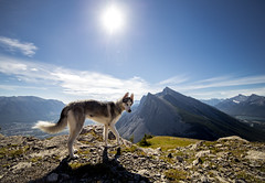 Badass Taz (V.Duplain) Tags: pet dog doggy puppy fur mountain mountains mount rundle eeor east end canmore alberta canada canon 6d rokinon 14mm hike hiking ha ling animal