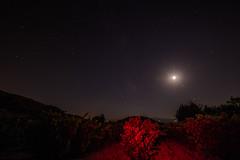 Vinas pintadas de Luz (Garimba Rekords) Tags: noche la rioja santa maria de piscina pecia cielo estrellas viedos linterna luz roja